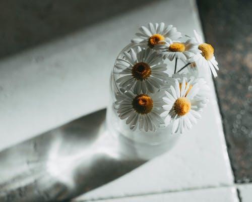Weiße Gänseblümchen In Klarer Glasvase