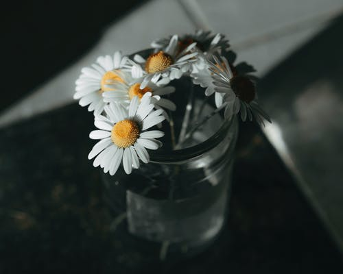 White Daisies In Clear Glass Jar