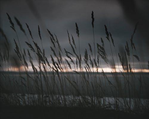 Δωρεάν στοκ φωτογραφιών με γρασίδι, δύση του ηλίου, εργοστάσιο, ηλιοβασίλεμα