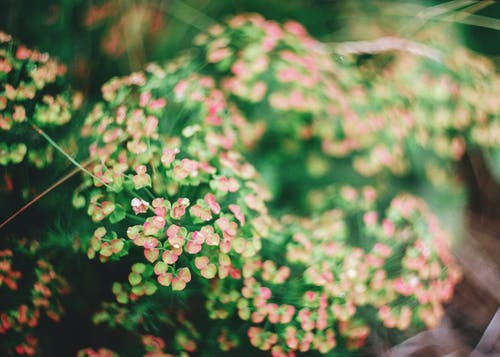 Kostnadsfri bild av löv, skärpedjup, trädgård