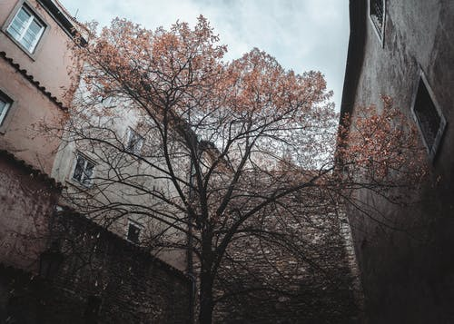 Brown Tree Near Brown Concrete Buildings