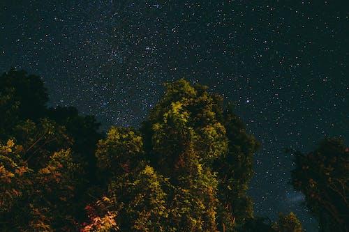 勘探, 夜空, 天性, 天文學 的 免费素材照片