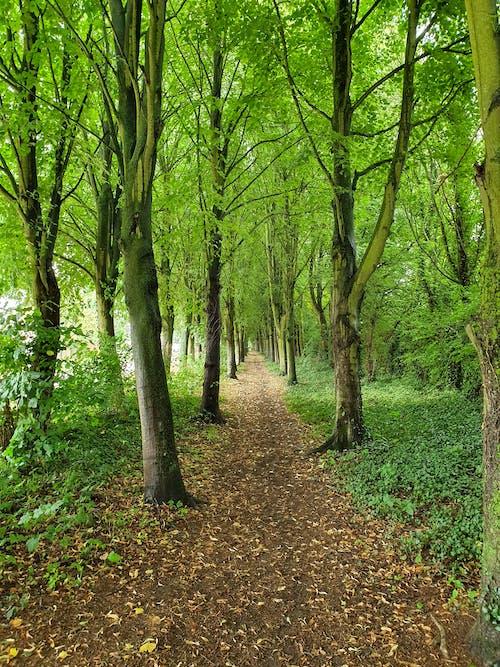 Photos gratuites de arbres, branches d'arbre, environnement, feuilles séchées