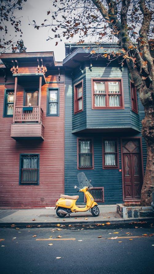 Free stock photo of ağaç, ağaç yaprakları, altın sarısı, Arnavut kaldırımlı sokak