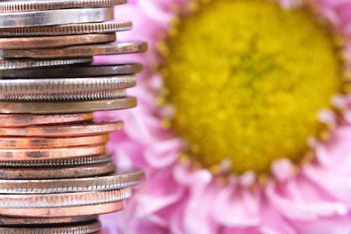 Photos gratuites de fleur, pièces, pièces de monnaie