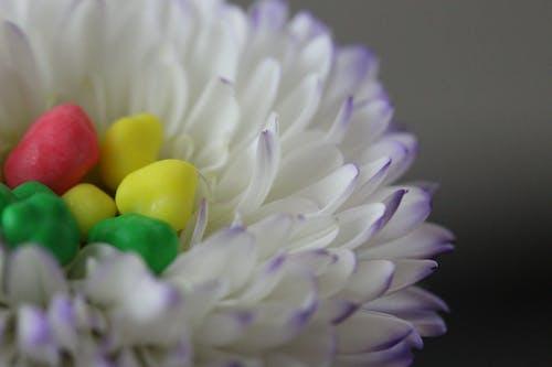 Photos gratuites de fleur, nerds