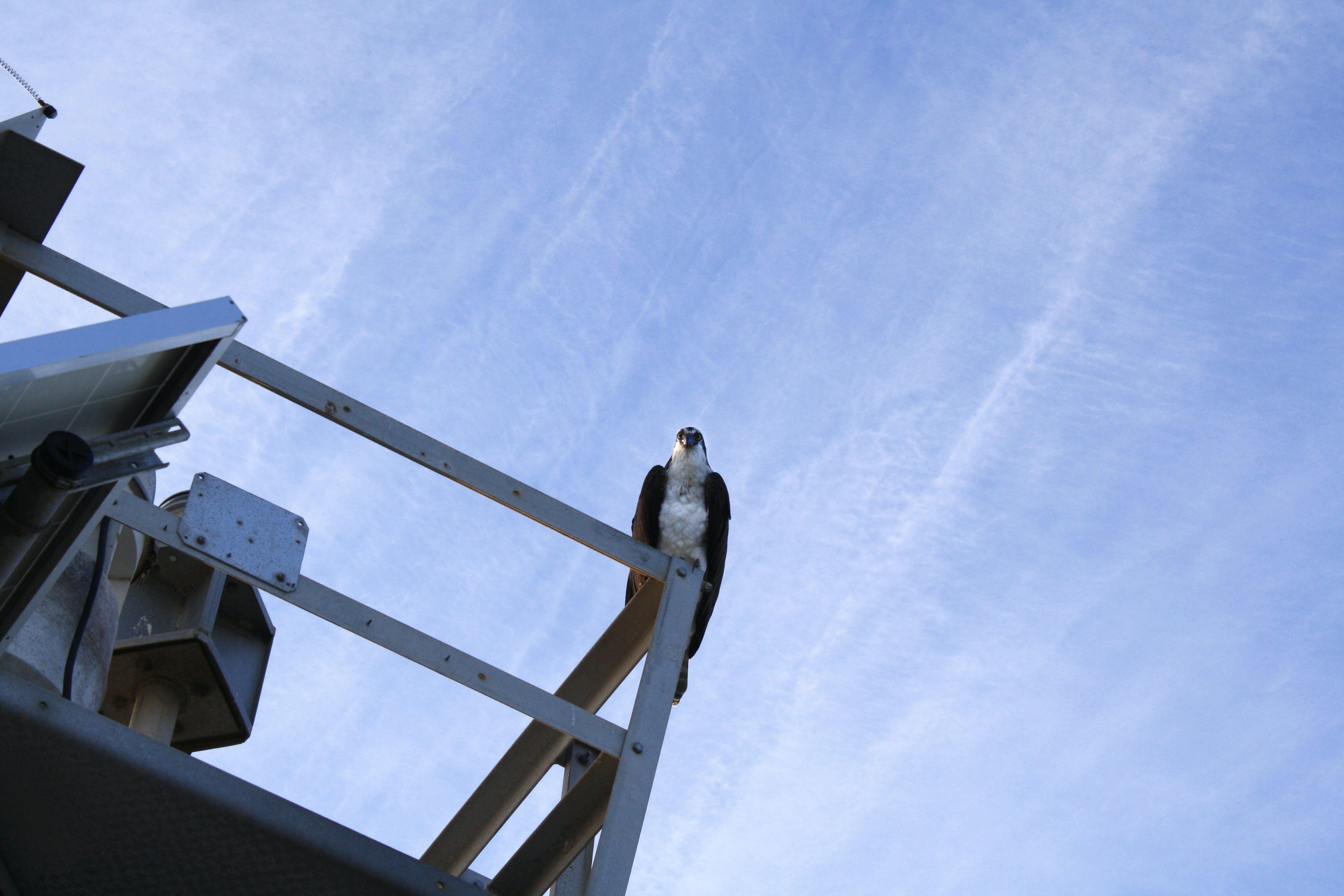 Free stock photo of sky, bird, beach, clouds