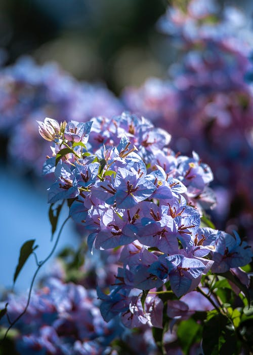 Gratis lagerfoto af blomst, klassiske linser, nærbillede, natur