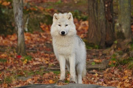 Free stock photo of animal, dog, cute, blur