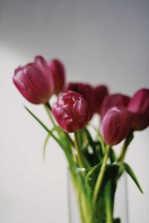 Rode Tulpen In Helderglazen Vaas