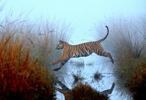 Free stock photo of nature, naturephotography, outdoorchallenge