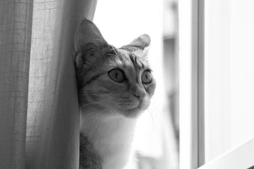 Free stock photo of cat, cats, home, window