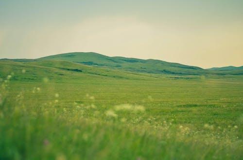 Foto d'estoc gratuïta de gespa verda, herba, muntanyes, natura
