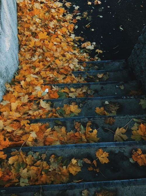 Kostenloses Stock Foto zu blätter, herbst, stufen, treppe