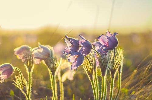 Foto d'estoc gratuïta de flor, flors, herba, natura