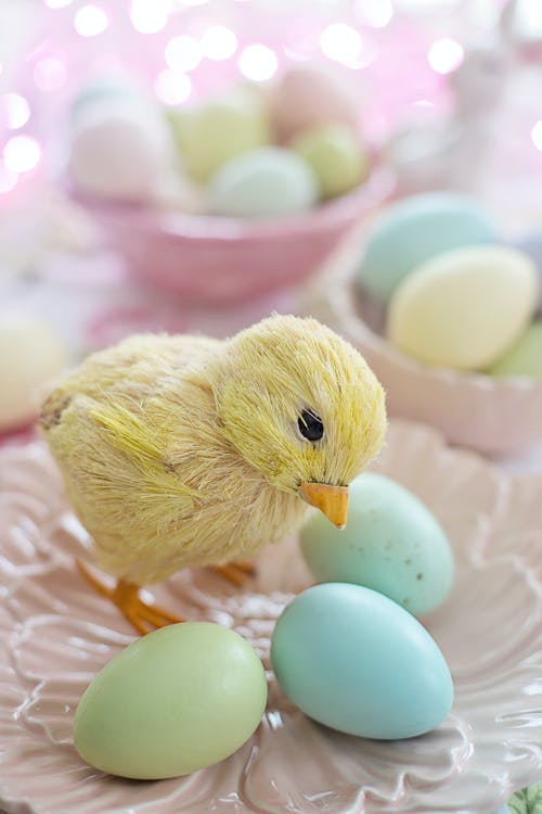 Yellow Chick on Pink and White Egg Shell