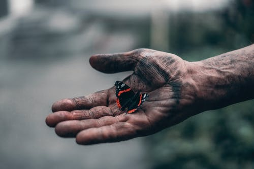 Black And Red Butterfly On Person's Hand