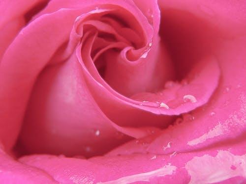 Foto d'estoc gratuïta de amor, flor, flora, florint
