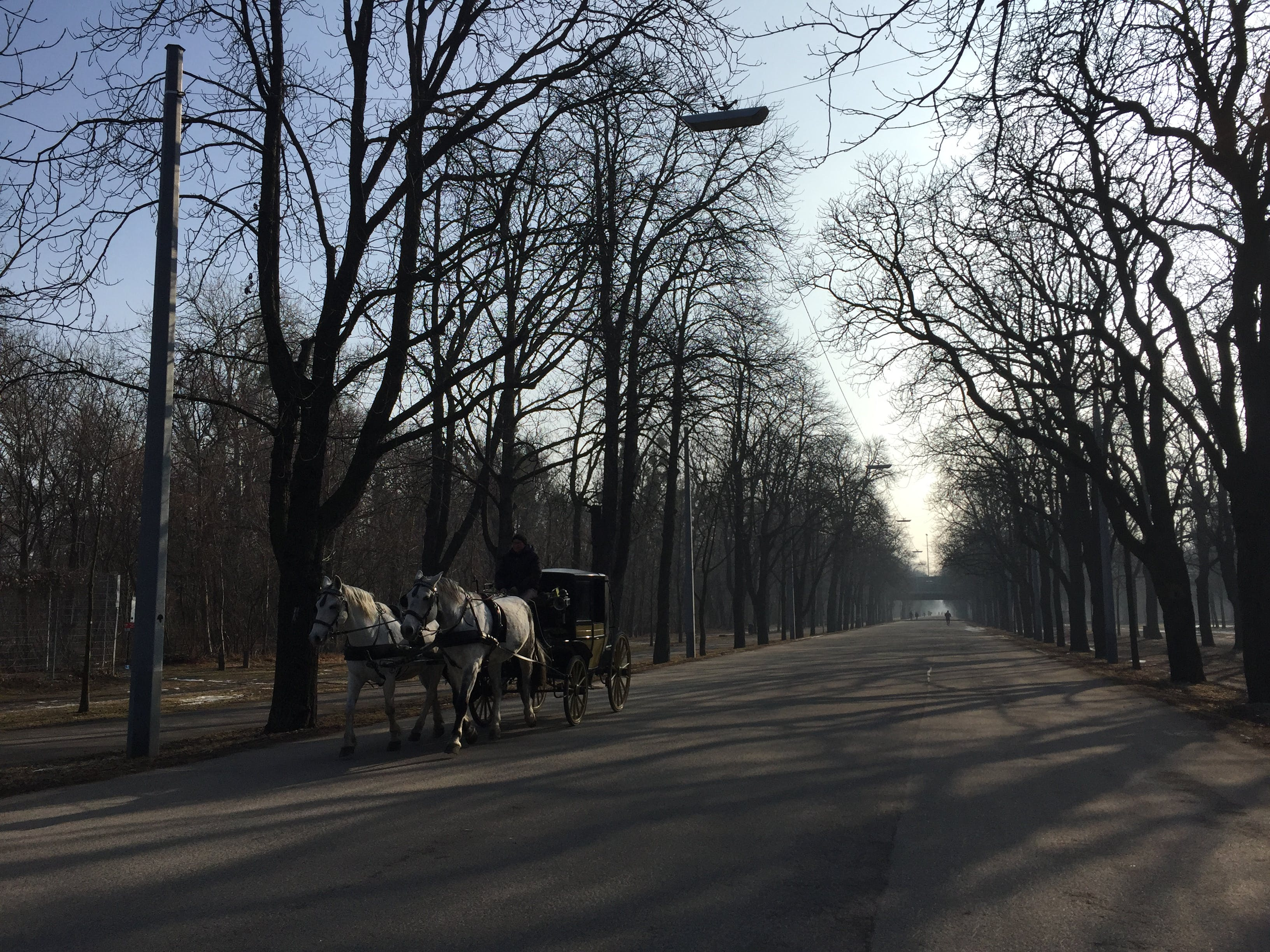 Free stock photo of alley, city park, horses, morning