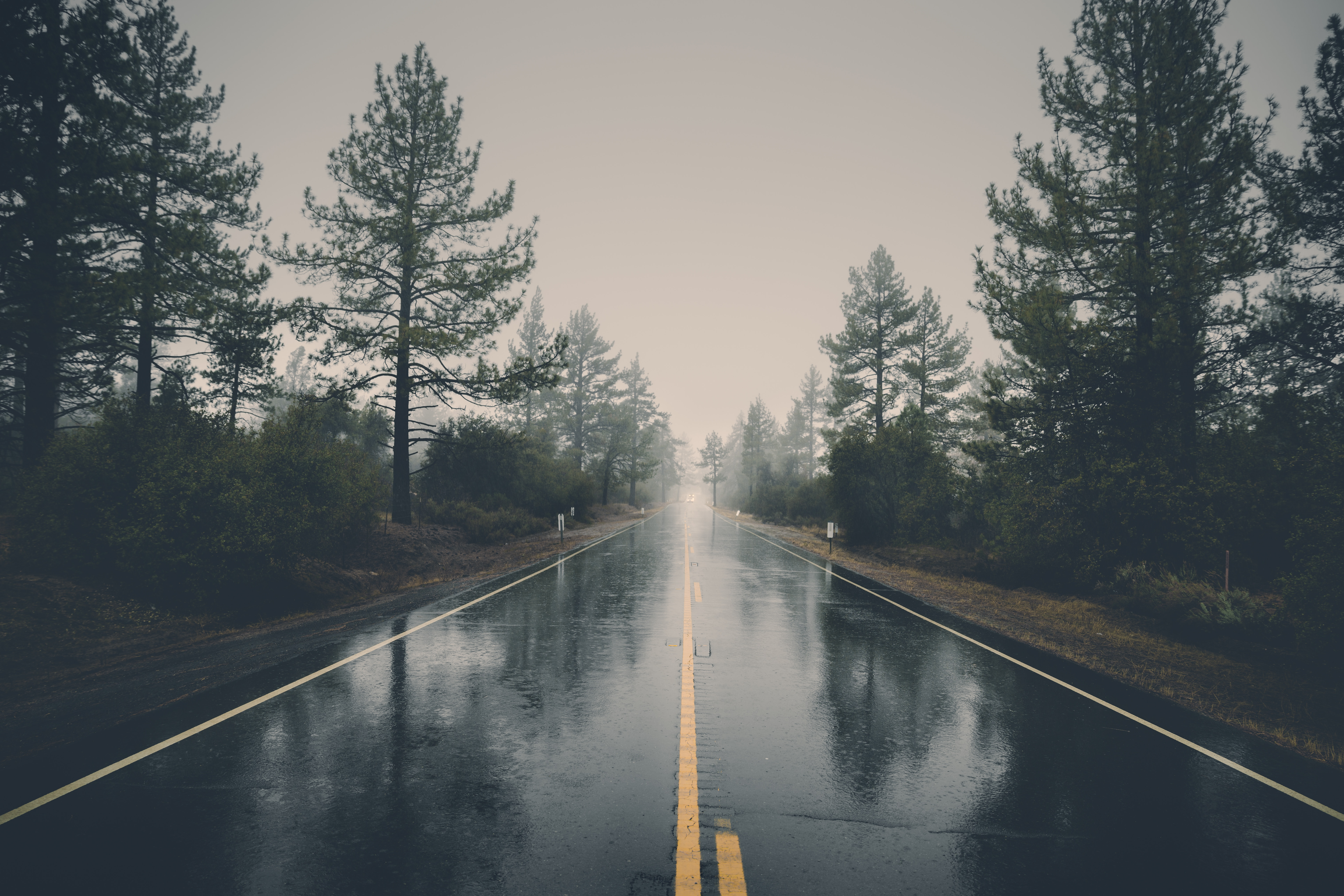 Beautiful Free Stock Photo Of Road, Landscape, Nature, Forest