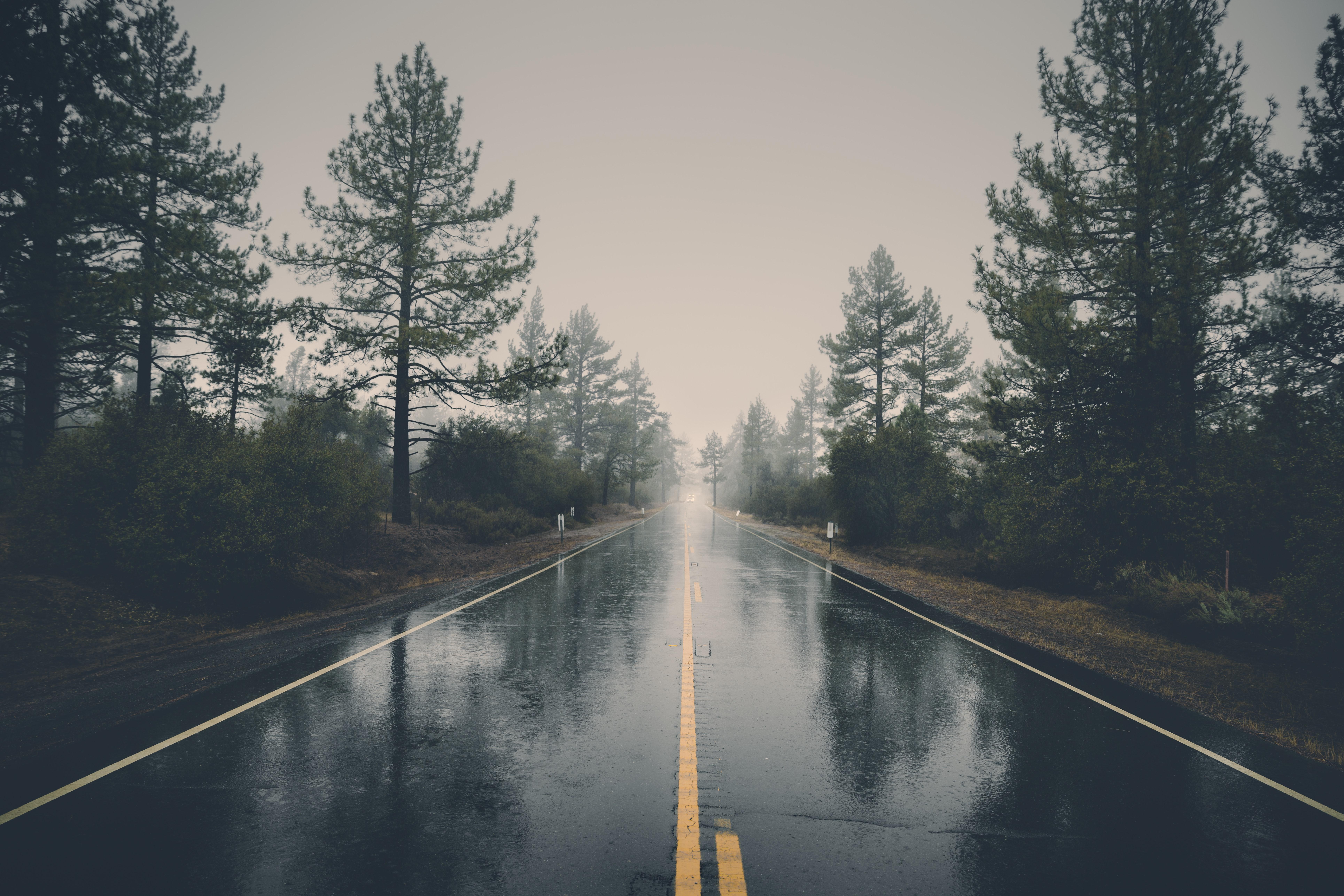 Foto Stok Gratis Tentang Alam Hujan Hutan