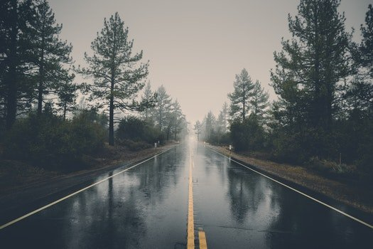 Free stock photo of road, landscape, nature, forest