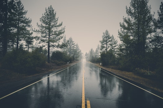 Nature wallpaper of road, landscape, nature, forest