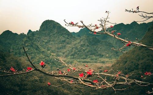 Foto d'estoc gratuïta de Àsia, cel blau, cim, costat de muntanya
