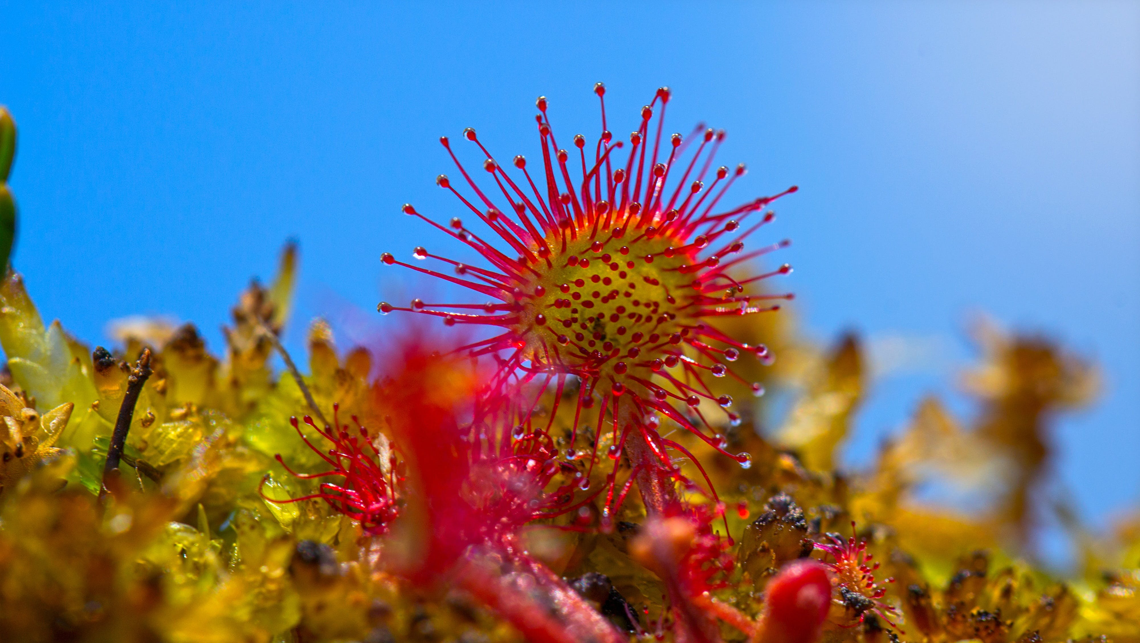 Yellow Red Flower during Daytime
