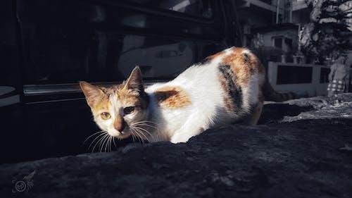 Free stock photo of animal, beautiful, best