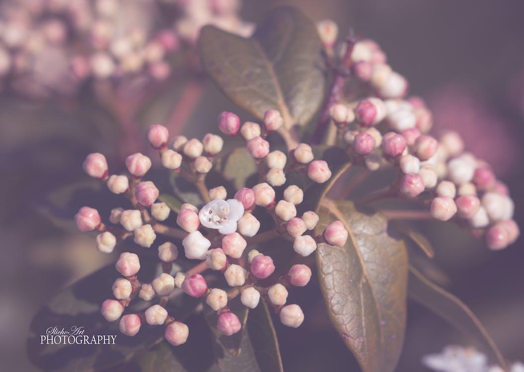 floare, înflorire, moale