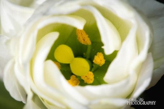 Free stock photo of yellow, white, flower, soft