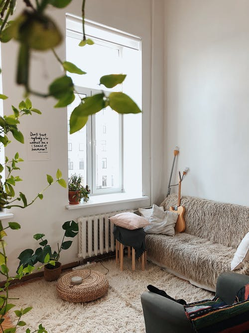 Green Plants Inside A Living Room