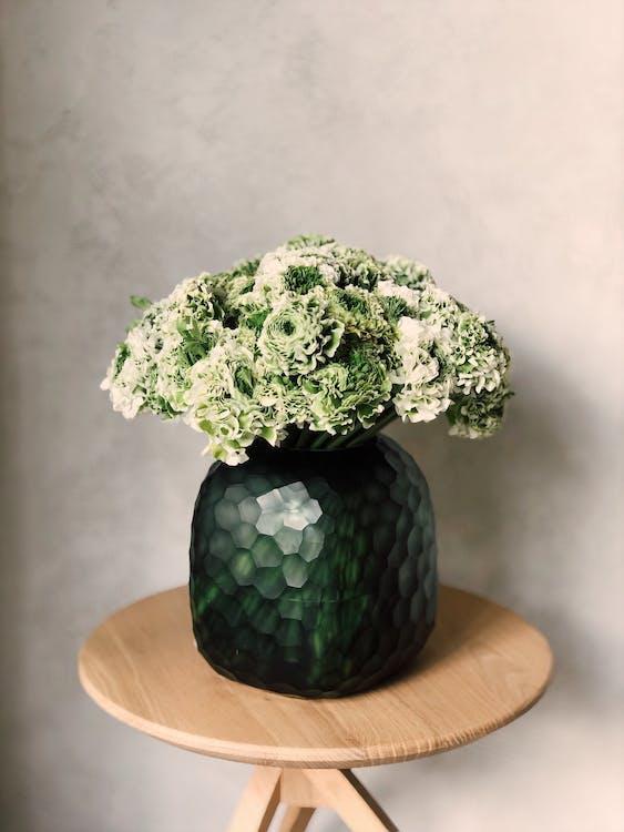 Základová fotografie zdarma na téma aranžování květin, jemný, karafiáty