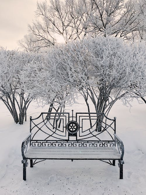 Trees And Bench Covered In Snow