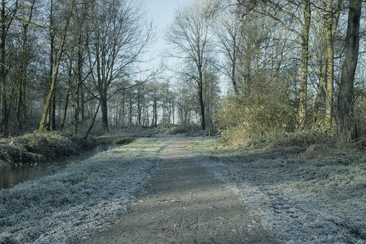 Free stock photo of nature, forest, winter, path