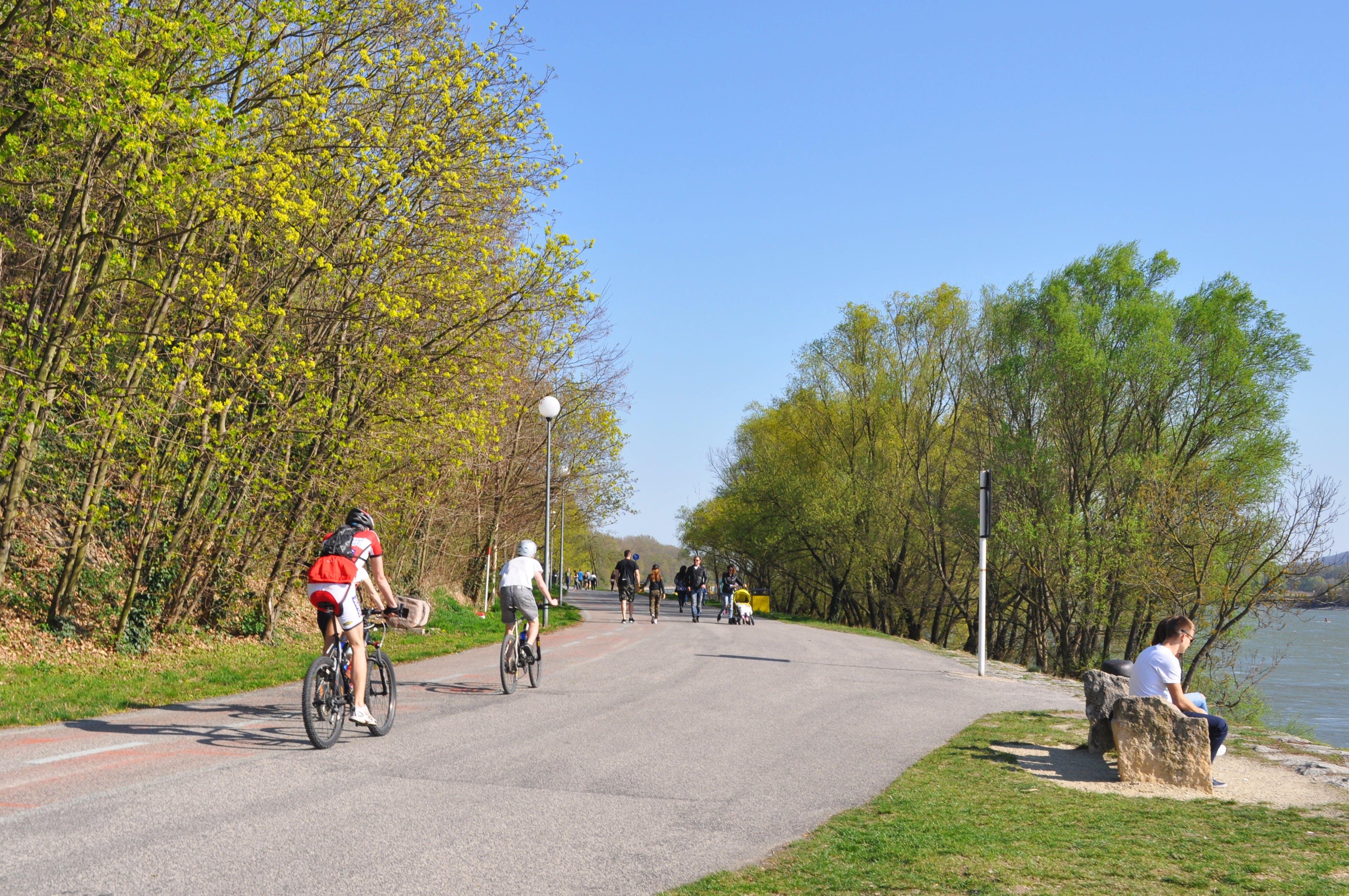 Immagine gratuita di alberi, bicicletta, bratislava, cieli blu