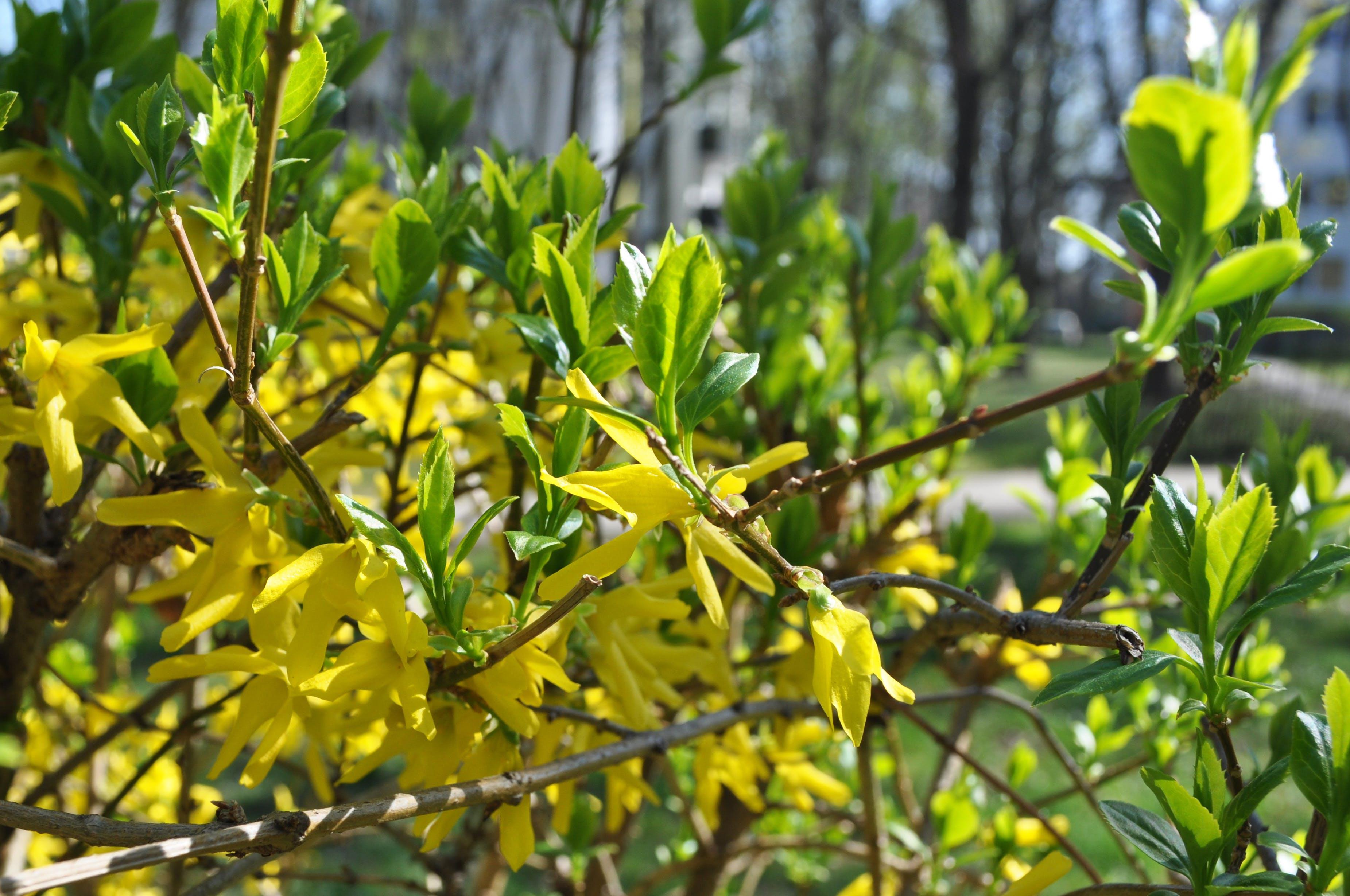 Fotobanka sbezplatnými fotkami na tému bratislava, kvety, modrá, obloha