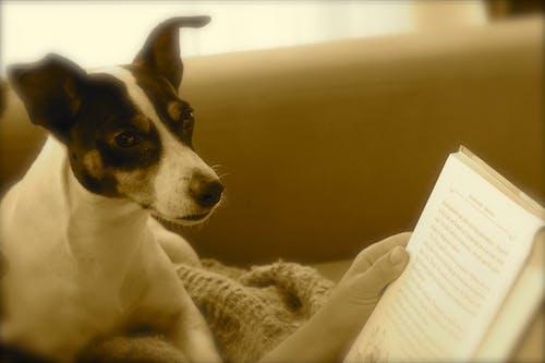 Free stock photo of Cachorro, libros
