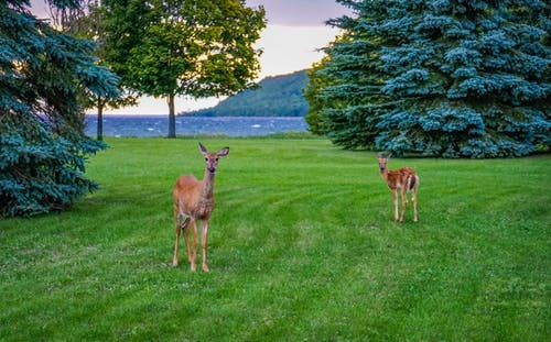 鹿 的 免费素材照片