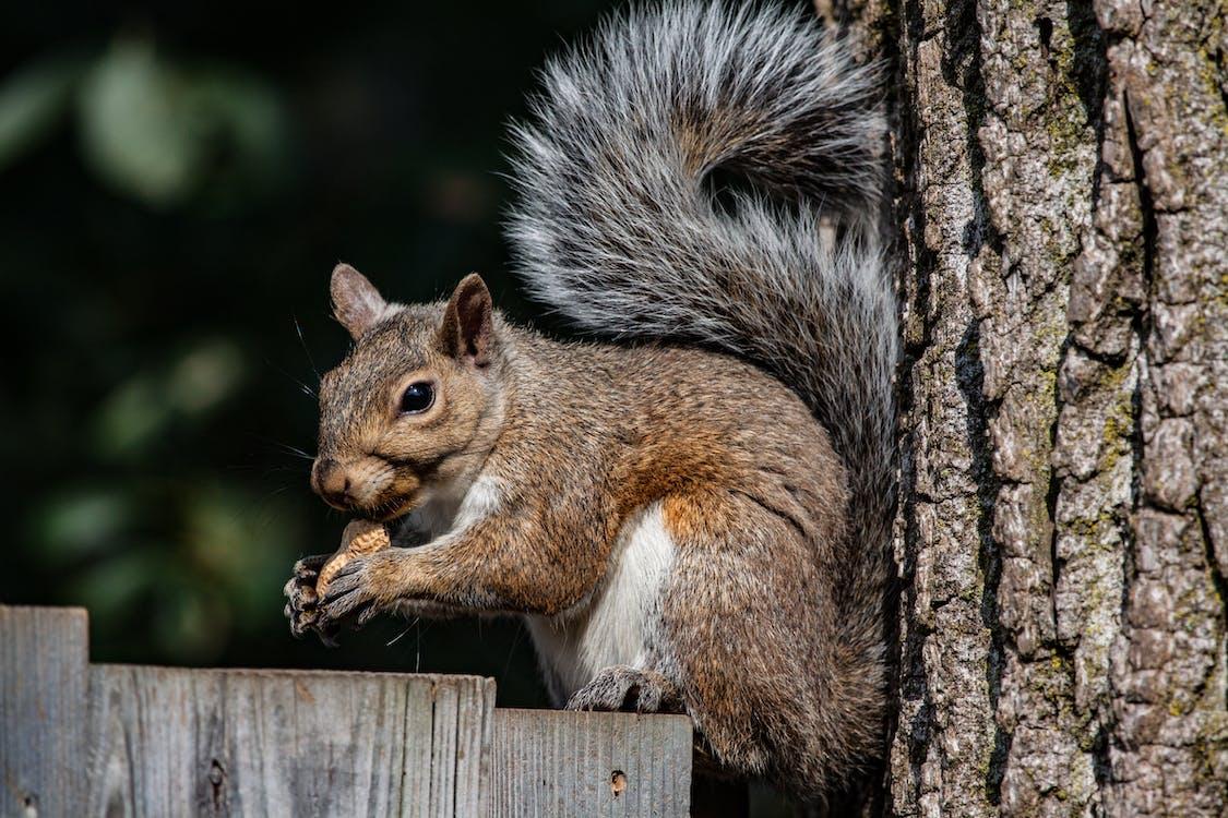 다람쥐, 동물
