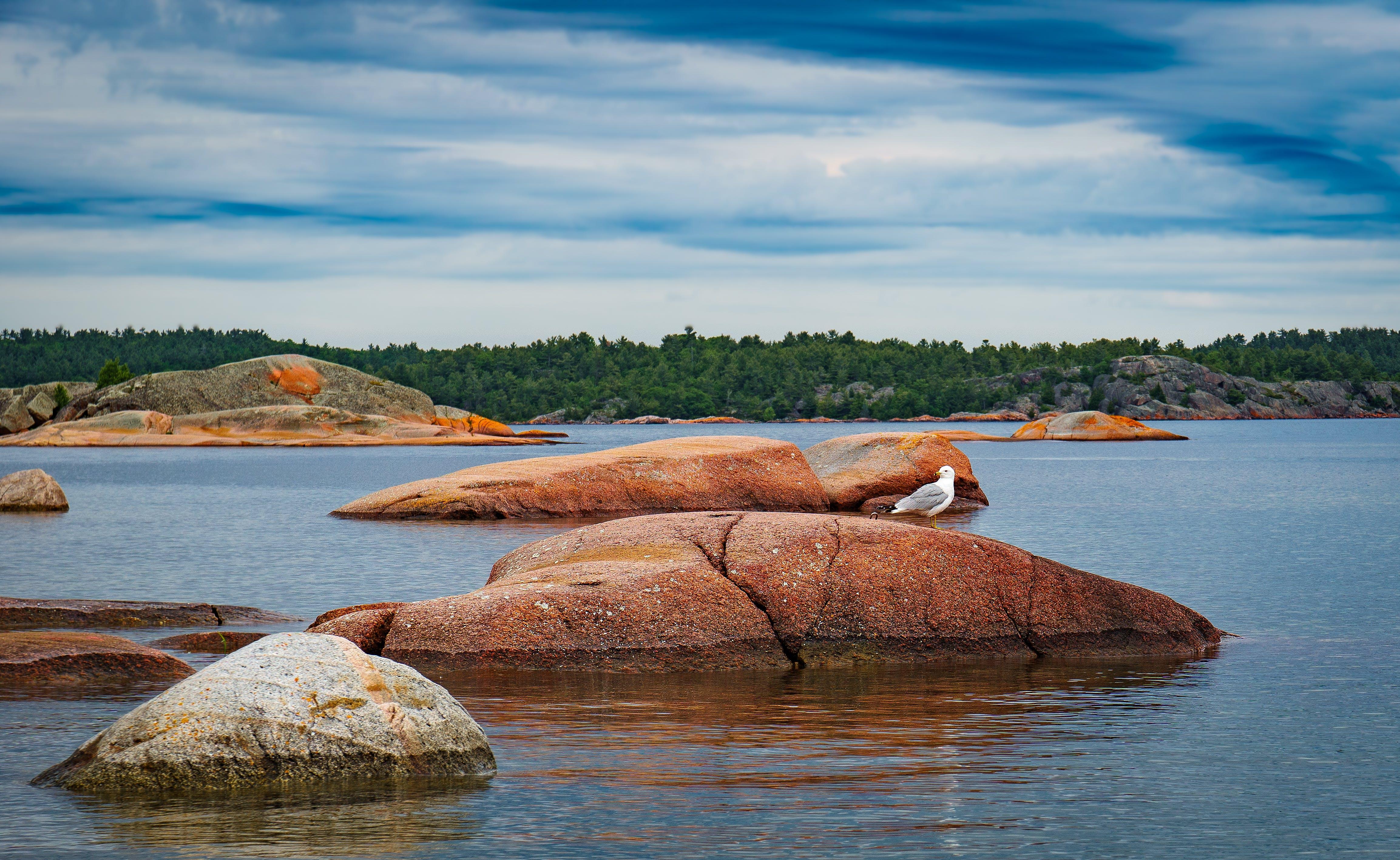 Fotos de stock gratuitas de gaviota, rocas