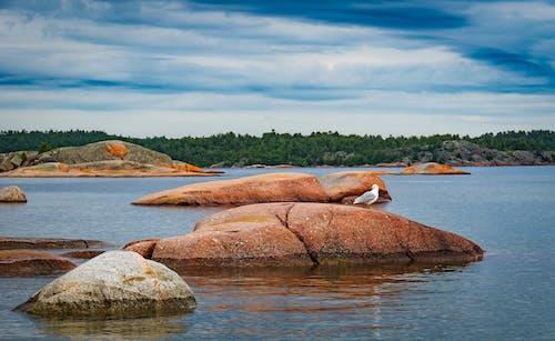 岩石, 海鷗 的 免费素材照片