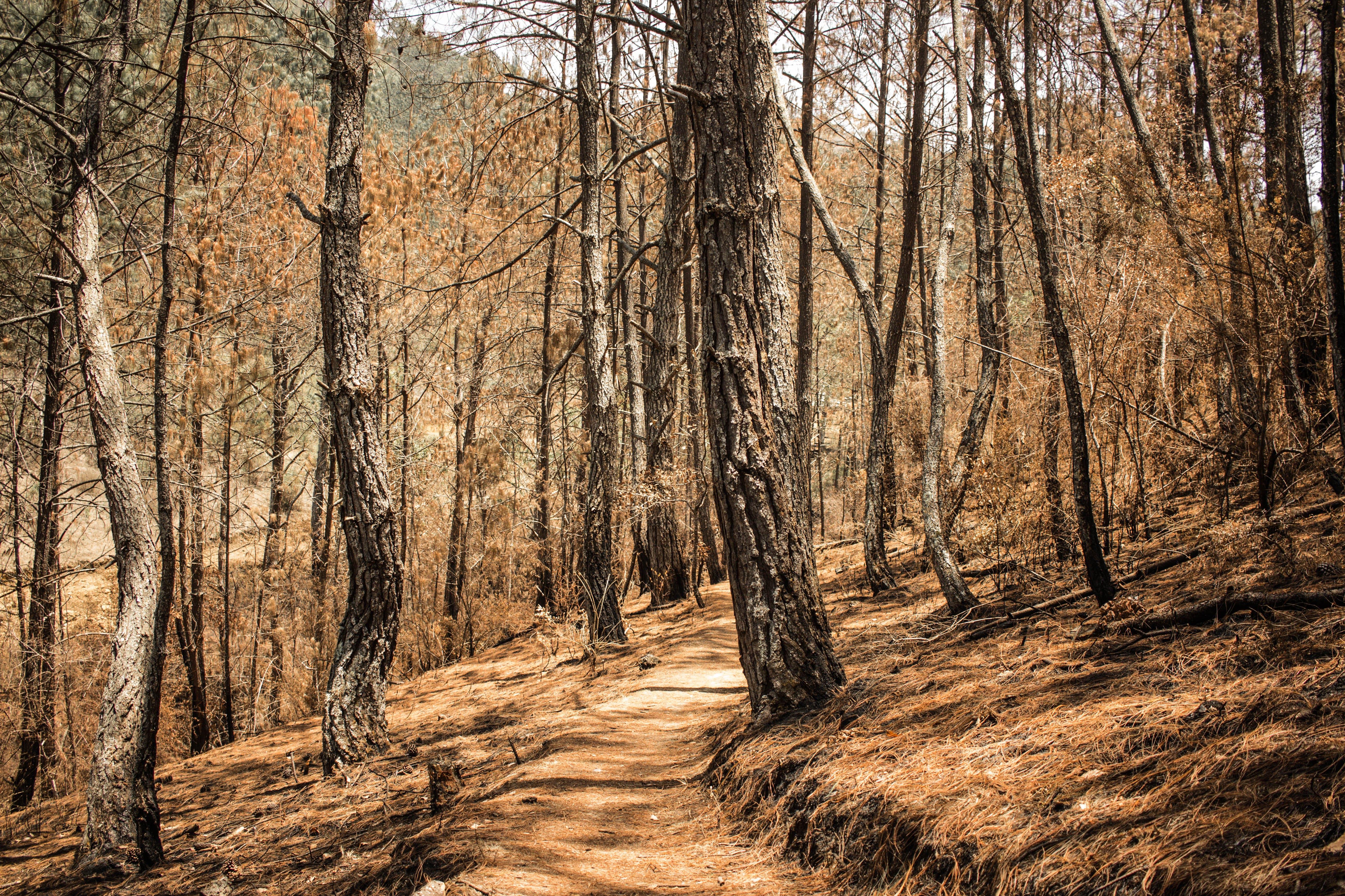 Fotobanka sbezplatnými fotkami na tému príroda, slnečné svetlá, sucho