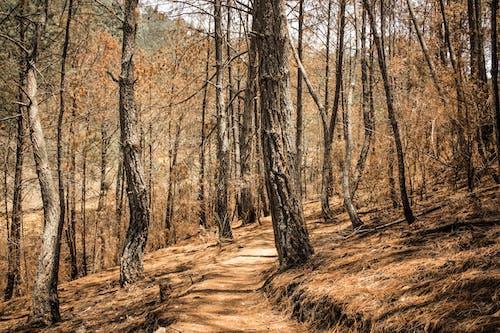 乾旱, 天性, 太阳灯 的 免费素材照片