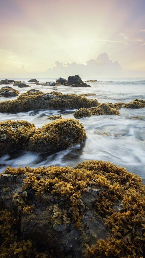 Photos gratuites de algue, aube, bord de mer, caillou