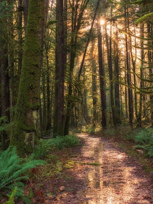 Foto d'estoc gratuïta de a l'aire lliure, alba, ampli temperat i bosc mixt, arbre
