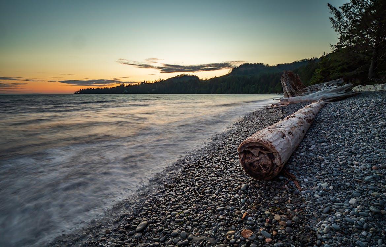 Brown Wood Log On Shore