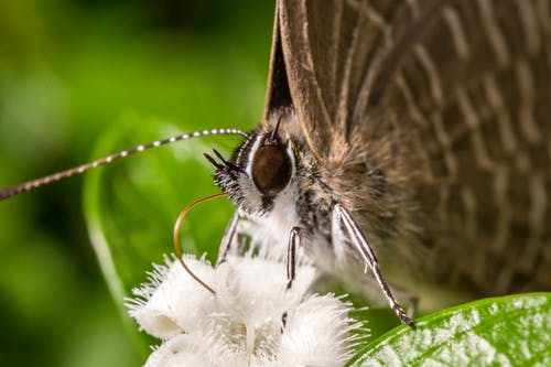 Brown and White Butterfly Perched on White Flower in Close Up Photography