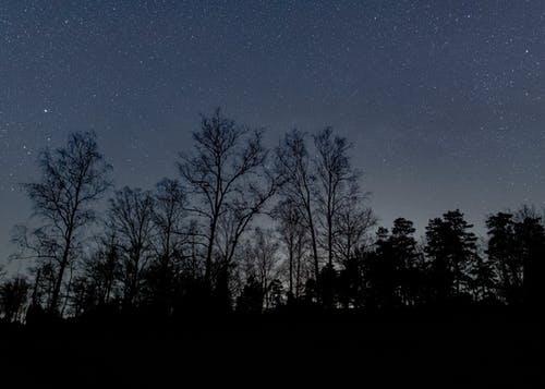 Free stock photo of dark, forest park, nightime